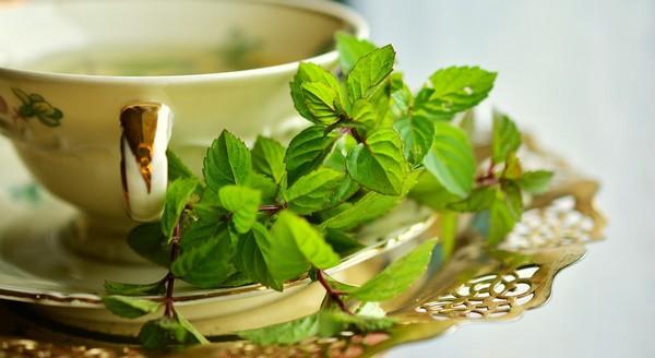 Tanaman Herbal dan Khasiatnya